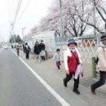 桜満開のもと家族揃ってウォーキングを楽しみました